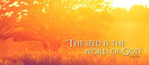 seed-word_2